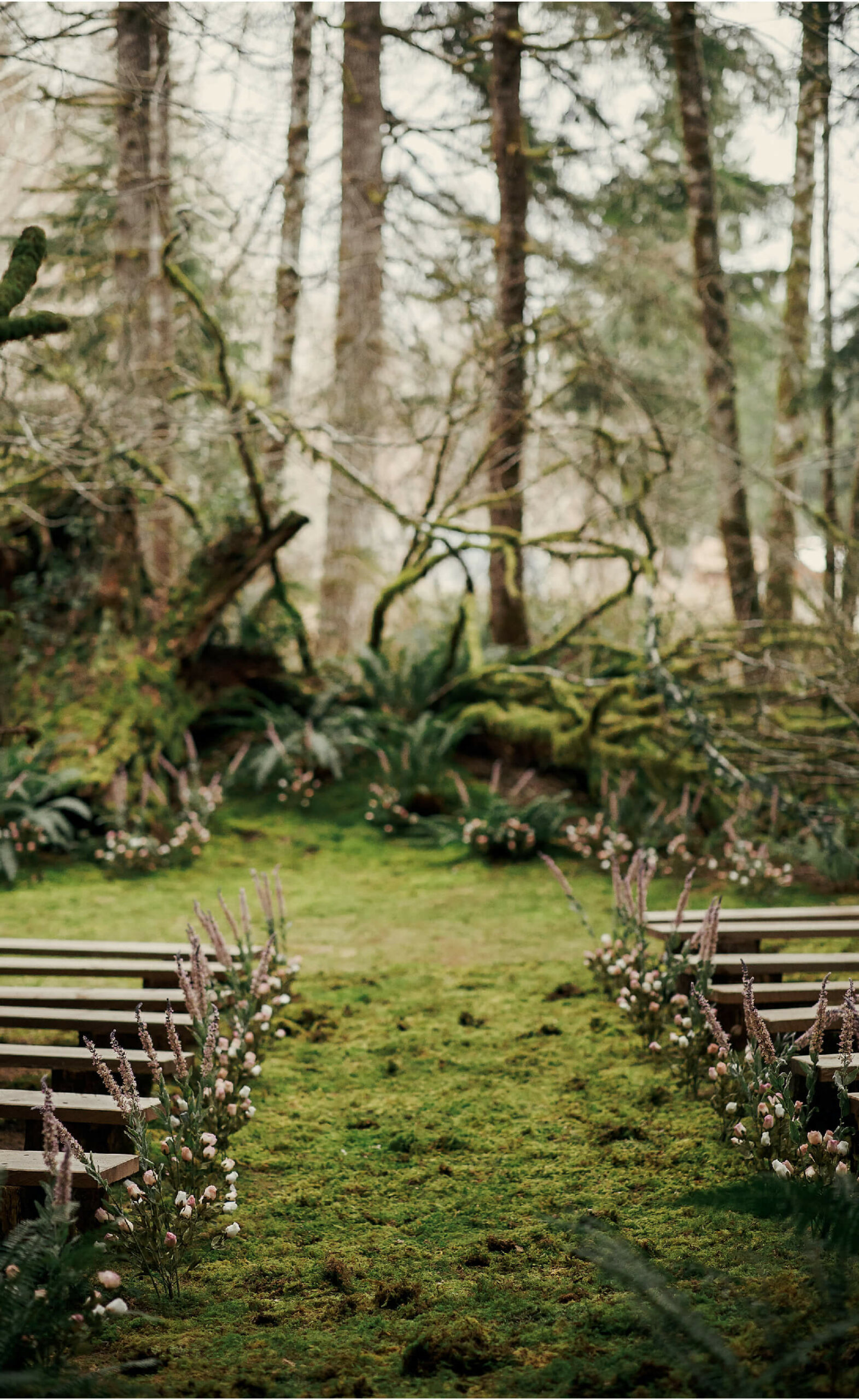 image of row seating in the middle of the woods